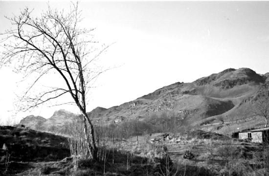 MzBarn bare landscape