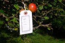 2012-08-18-Apples