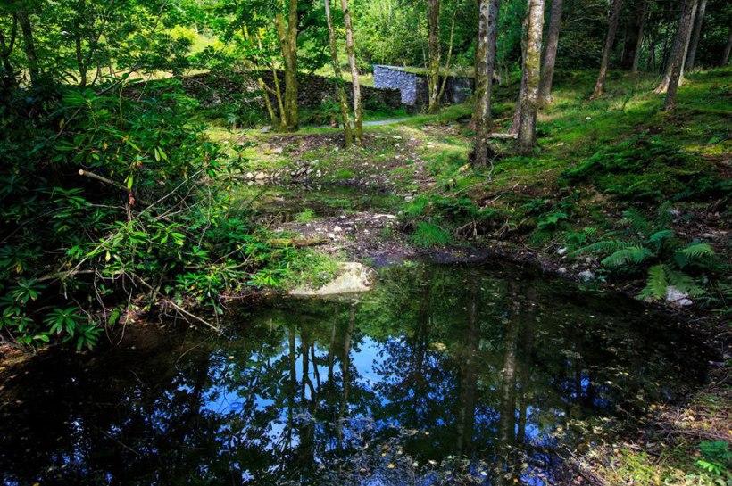 Pond-(Martin)